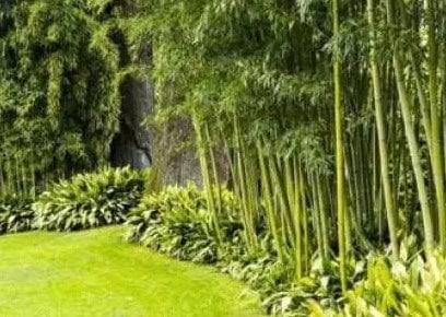 Cara Buat Taman Minimalis Tidak Becek